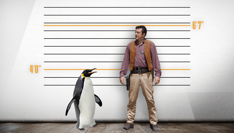 Penguin and James Arness Height Comparison